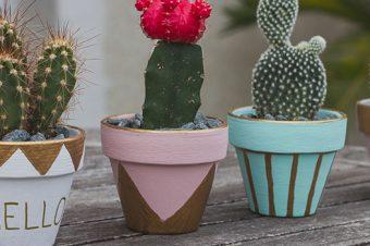 DIY : Passion Cactus
